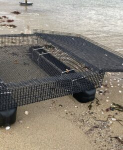 Recreational Shellfish Aquaculture