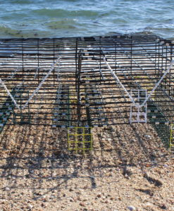 oyster cage 1