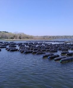 Commercial Shellfish Aquaculture